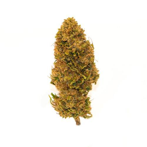 Purpurensi - 500 gr