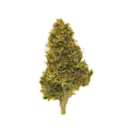 Biscotti - Serra - 4 grammi