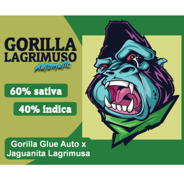 Gorilla Lagrimuso